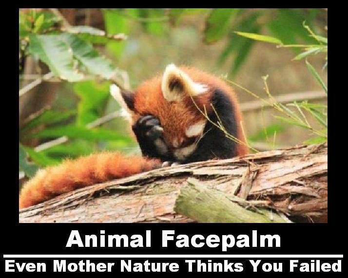 Même le plus mignon des animaux existant dans l'Univers sait qu'on est mal barré
