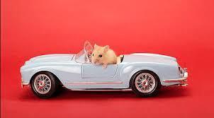 Une souris dans une voiture, parce que, vous l'aurez compris, j'adore les souris !